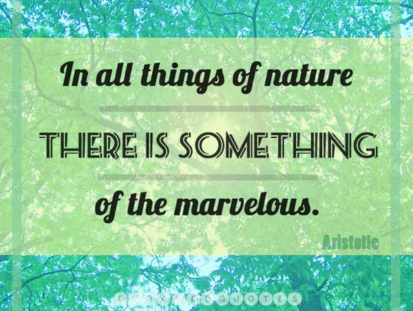 nature-picture-quote