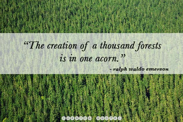 quotes-about-trees
