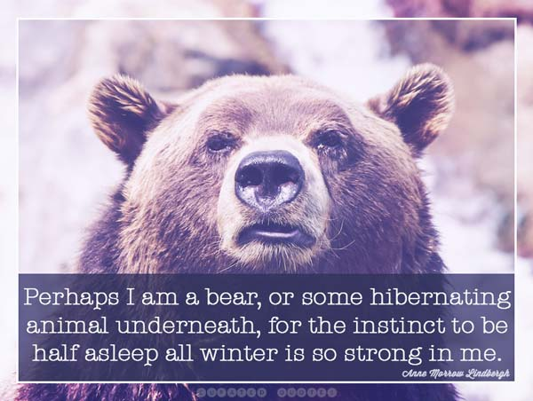 Winter Hibernate